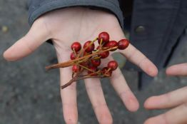 Child holding berries at Wilderness School