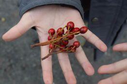 Child holding berries at Wilderness School