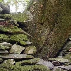Moss wood and stone