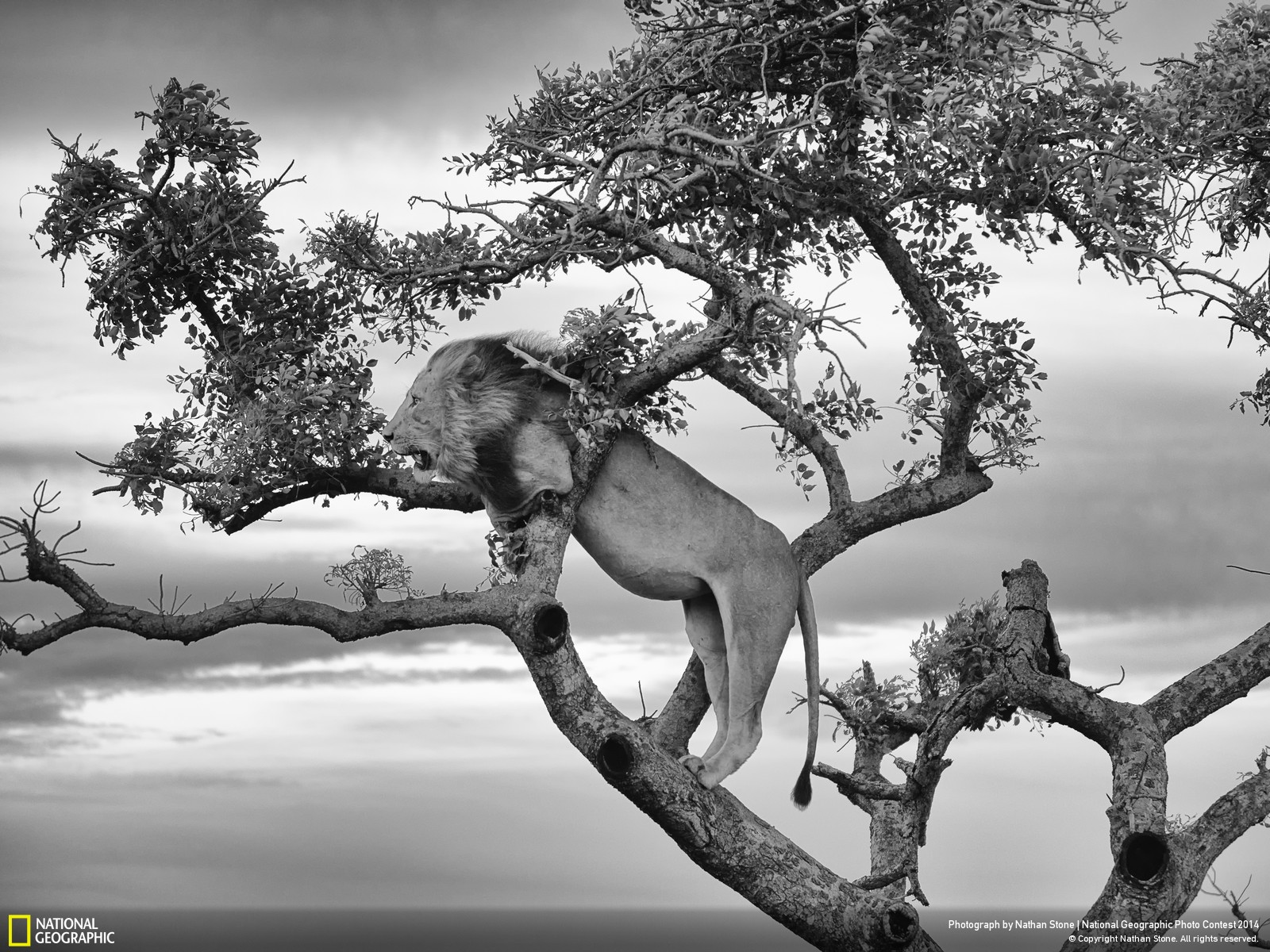 10 of the best national geographic photographs submitted in 2014