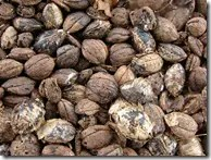 Tropical Almond nuts