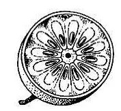 Drawing of Bael Fruit
