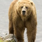 Bear Dangers and how to defend yourself against a bear attack
