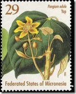 Stamp with Pangi tree picture