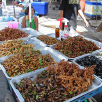 Eat bugs for survival? The U.N. says it's a good idea in new promotion for Entomophagy