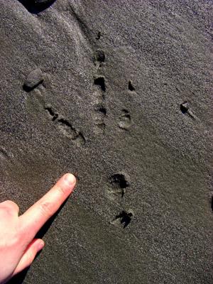 Bird Tracks Identification