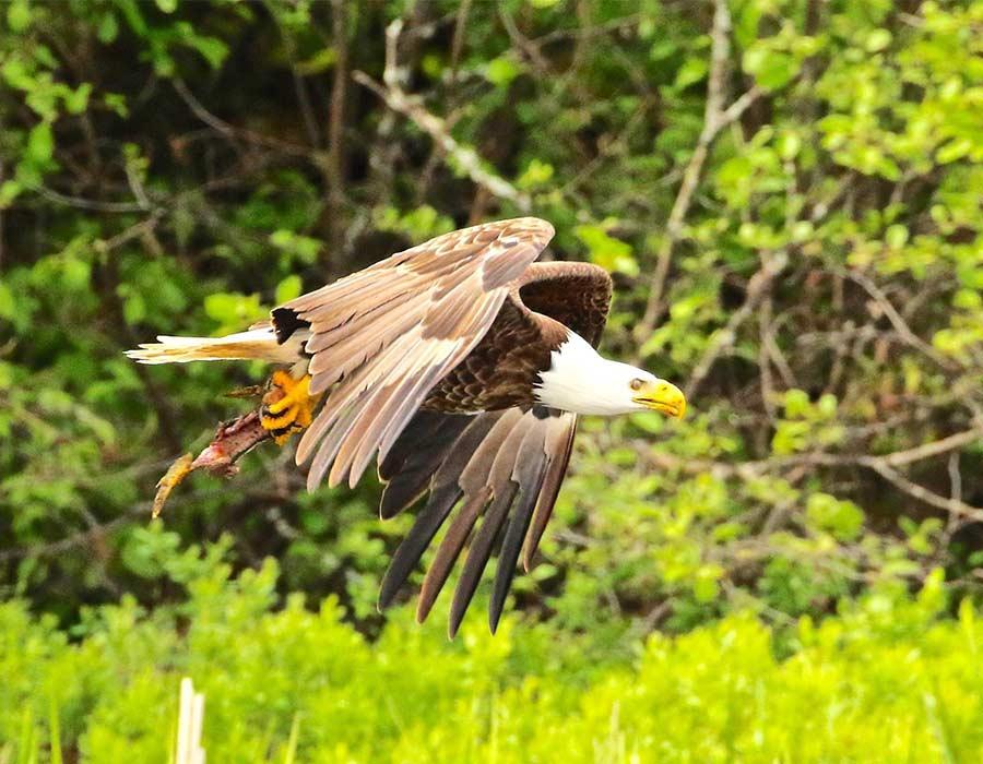 bird-watching-feature-photo