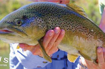 Guided Fly Fishing- The Quality Waters of the San Juan River