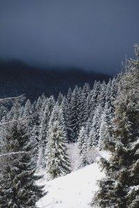 Snowy Trees in Pagosa Springs Colorado