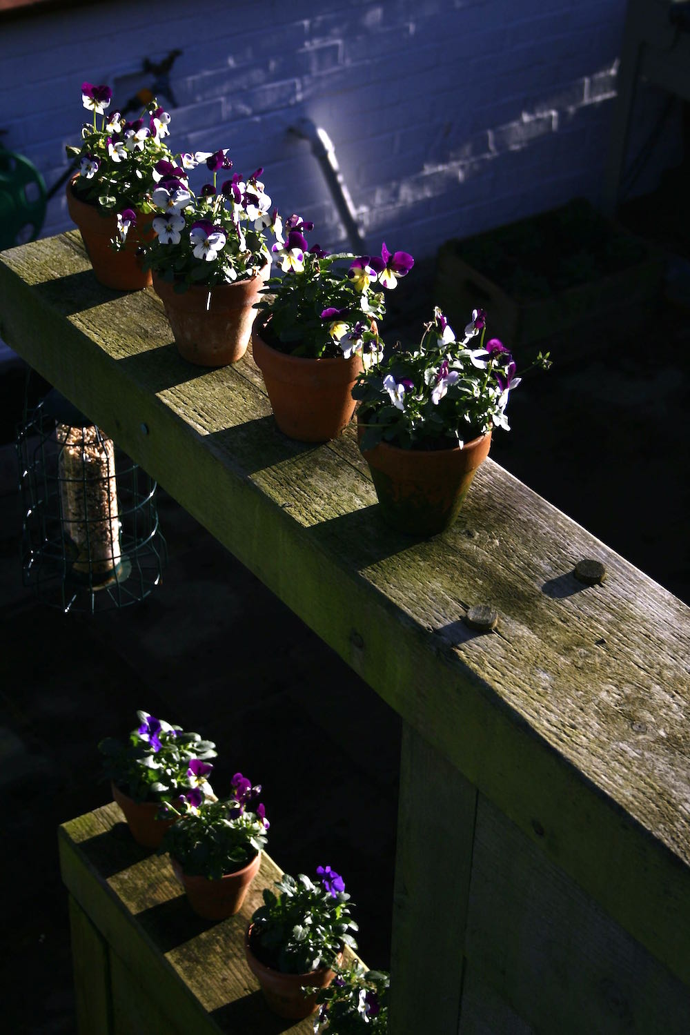 viola containers