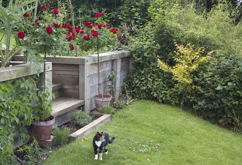 roses and cat