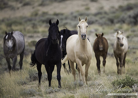 Salt Wells Creek Wild Horse Family