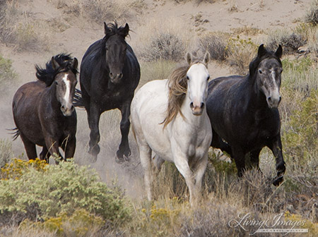 Adobe Town Mares in 2010 Roundup