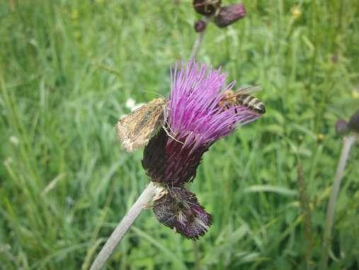 Insekten an Distel © Wildland-Stiftung Bayern