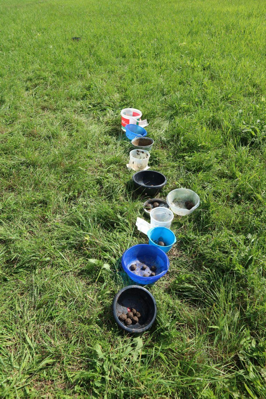 Seed bombs beim Trocknen
