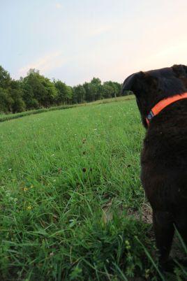 Hunde während der Brut- und Aufzuchtzeit an der Leine führen