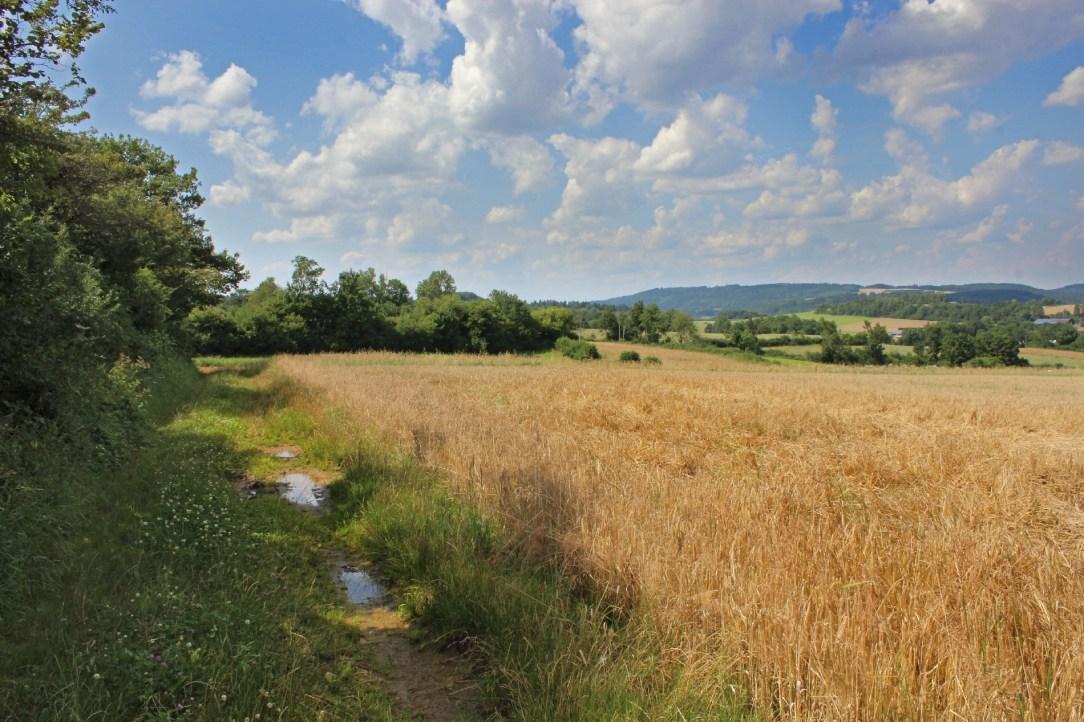 Ziel: Strukturreiche und vernetzte Agrarlandschaft©Ökol. Bildungsstätte Oberfranken