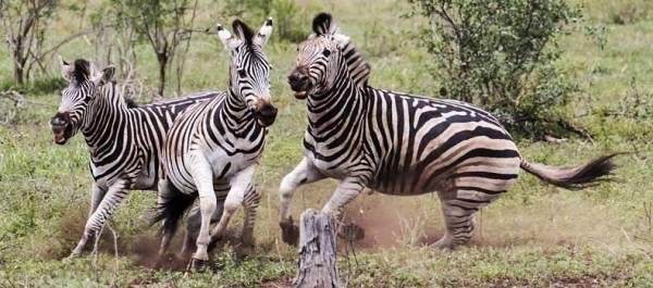 Wildlife picture galleries showcasing Africas spectacular