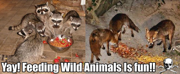 Risultati immagini per feeding wild animals