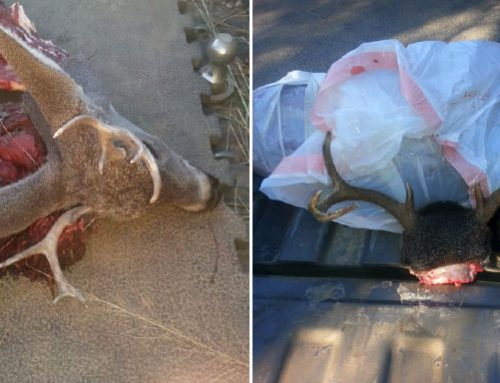 Poachers Steal New Mexico's Wildlife Despite Prevention ...