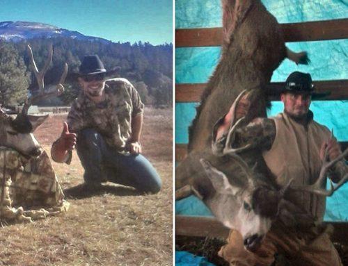 Trophy Bull Elk Found Dead, Poaching Suspected - New ...
