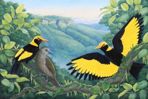A Golden Moment - Regent Bowerbirds