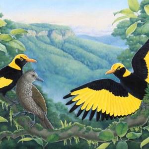 A Golden Moment - Regent Bowerbirds
