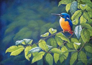 Azure kingfisher- Peaceful Days