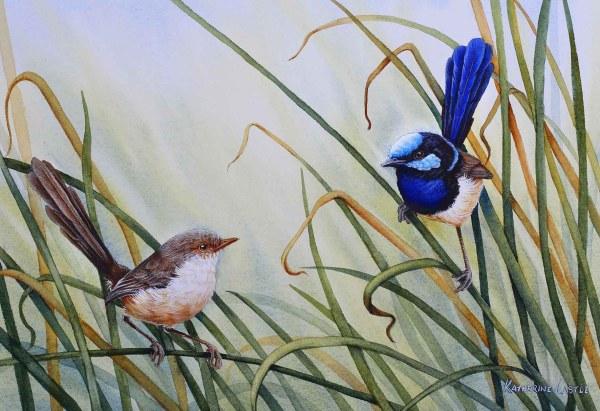 Spring Ardour - Superb Fairy-wren Painting