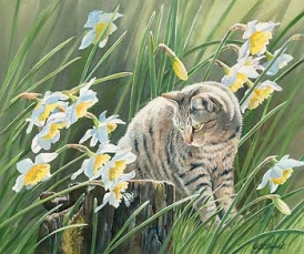 """"""" Dazzled """" Cat Watching Butterfly - Original Painting by Susan Bourdet"""