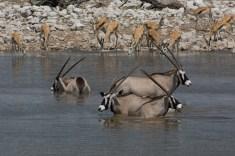 Am Wasserloch 3, Oryxantilopen