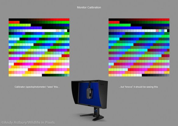 moncal2 600x427 Monitor Calibration with ColorMunki
