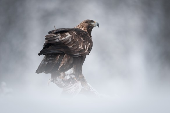 Eagle 600x400 Lightroom Tutorials #2
