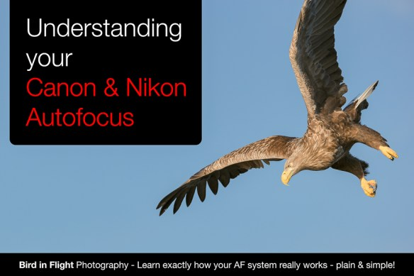 GX2R2055 Edit 21 Autofocus Guide for Long Lens Bird in Flight Photography