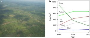 Aerial photo (Photo: Heiko Faust) (a) and changes in the land-use composition (b) of the studied landscapes around the national park Bukit Duabelas and the Harapan Forest Restoration concession in Jambi Province, Indonesia from 1990 to 2011, based on land-use classification inferred from remote sensing. Rainforest (dark green diamonds), rubber (light green filled circles), oil palm (red squares), shrub/bushland (grey up-pointing triangles), and 'others' (blue down-pointing triangles), which includes amongst others food crops, timber and fruit tree plantations. See Table 1 for the 1990–2011 land-use change matrix.