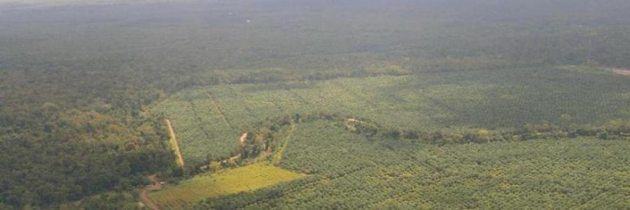 UPI | Project promises to turn palm oil plantations back into rainforest in Borneo