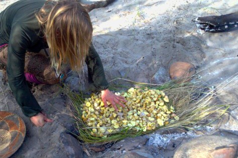 putting california buckeye nuts into Steam pit