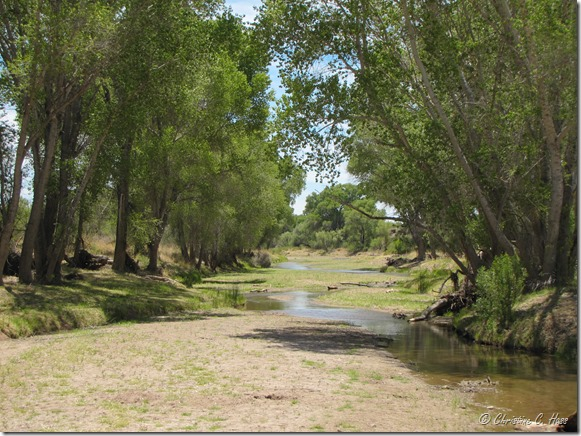 The San Pedro River provides vital wildlife habitat in the desert.