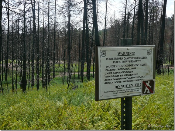 Rustler's Park campground in the Chiricahua Mountains, 1 year after the Horseshoe 2 wildfire.