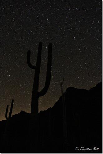 Night skies at Organ Pipe National Monument