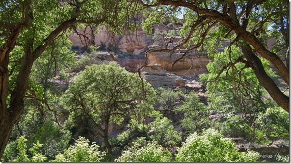 Lush vegetation and steep canyon walls create diverse environments for wildlife.