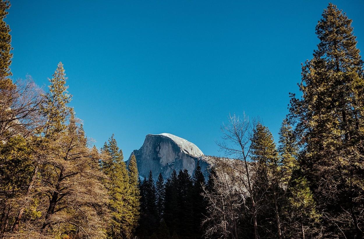 wild-native-photography-blog-yosemite_0013