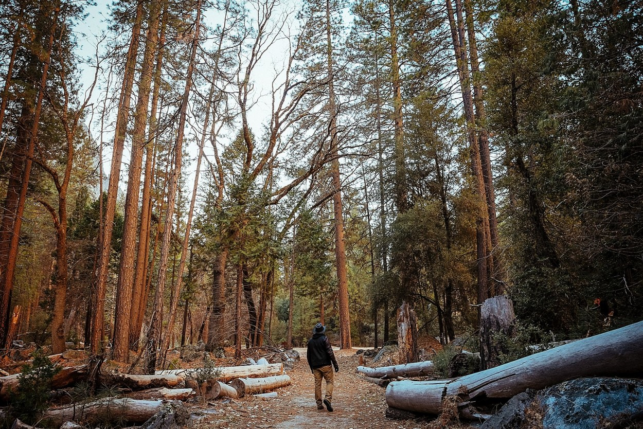 wild-native-photography-blog-yosemite_0029