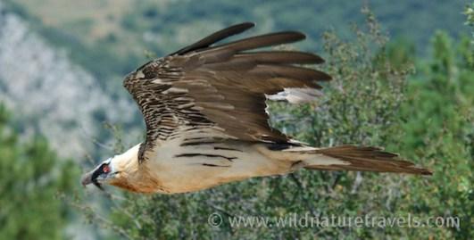 vogel- en natuurreizen Spanje, vogelfotografie
