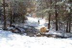dogs in snowy creek