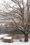 march snow in the ozarks