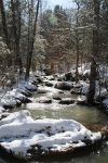 snowy creek tall