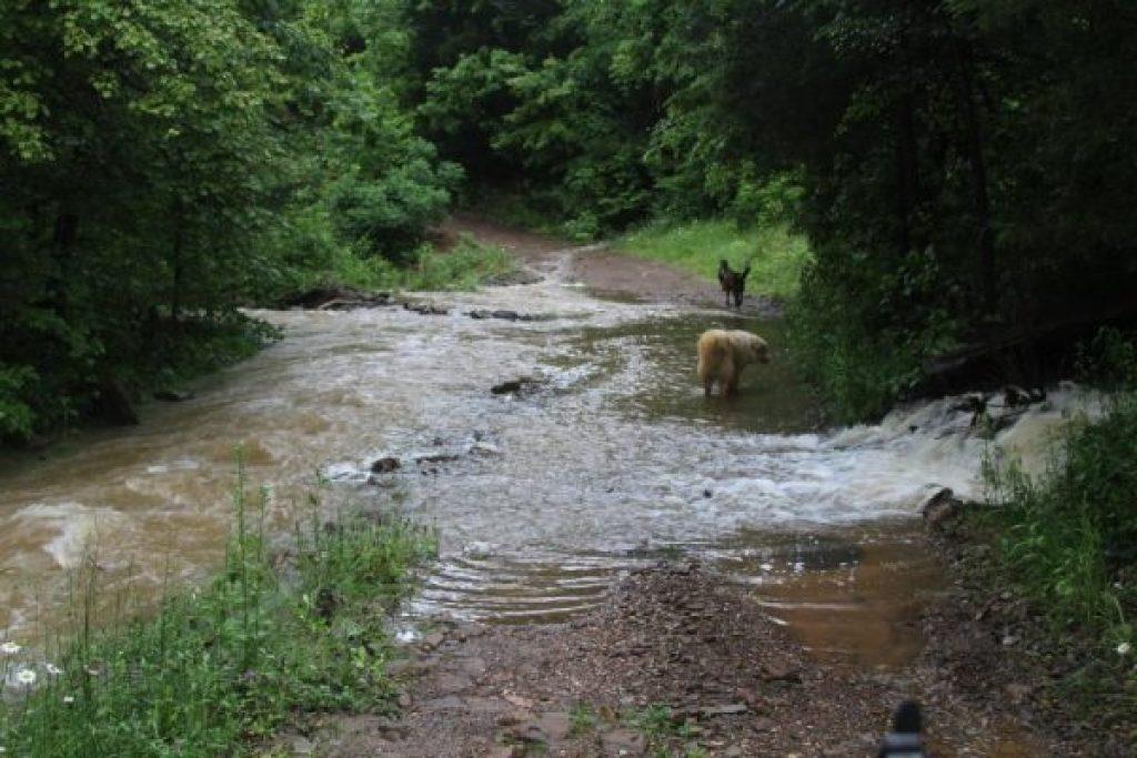 Water in the Wild Ozark driveway.