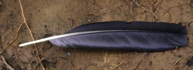 Crow feather on mud.