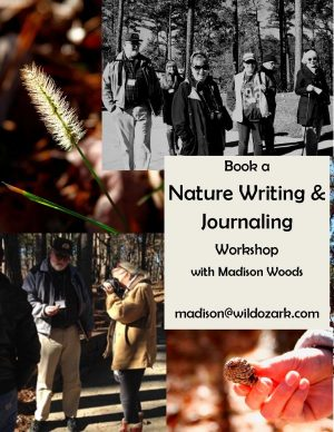 nature workshop flier
